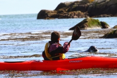 Kayaking with the seal in Dalkey (77)